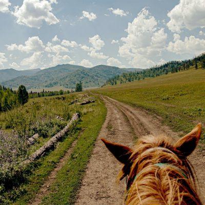riding horse hiking