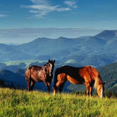 The herd of horses in the mountains
